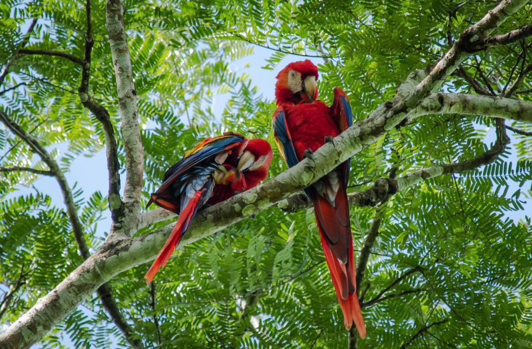 Expedition Amazonas - Bild