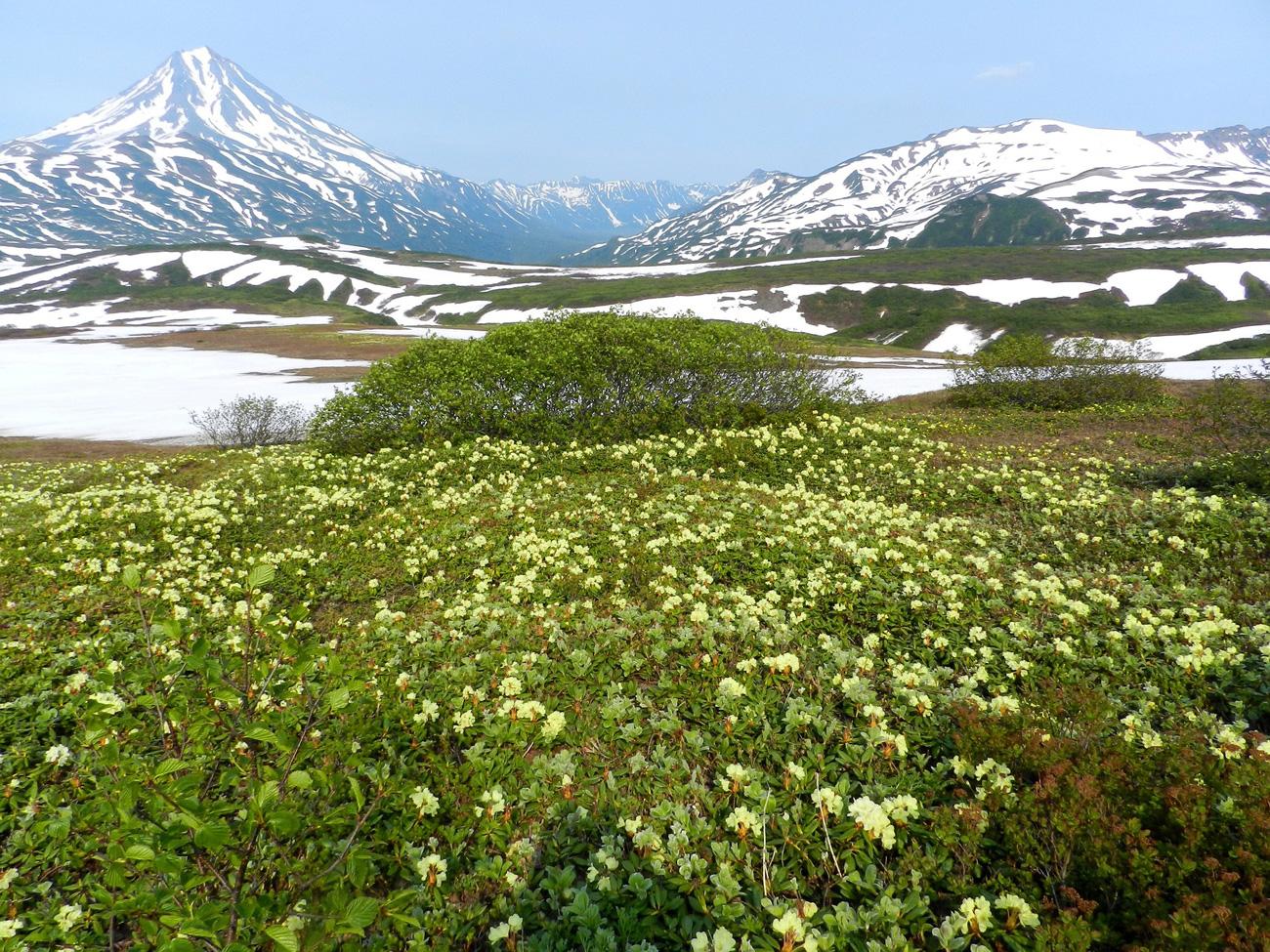 Expedition Kamtschatka, Kurilen und Aleuten - Bild