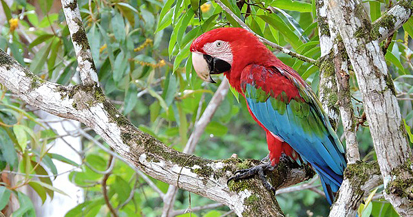 Amazonas - Bild 2