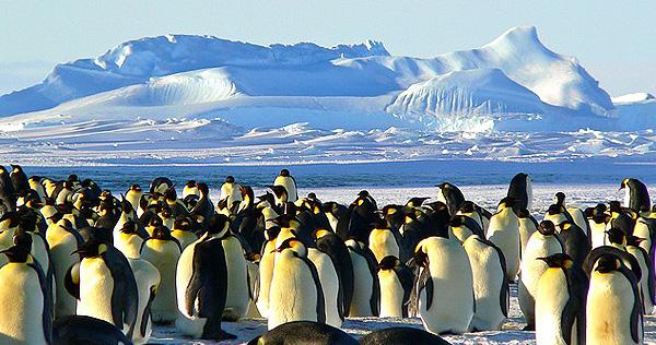 Antarktis / Südliches Polarmeer - Bild 2