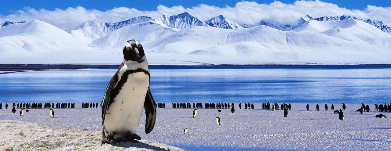 Antarktis / Südliches Polarmeer