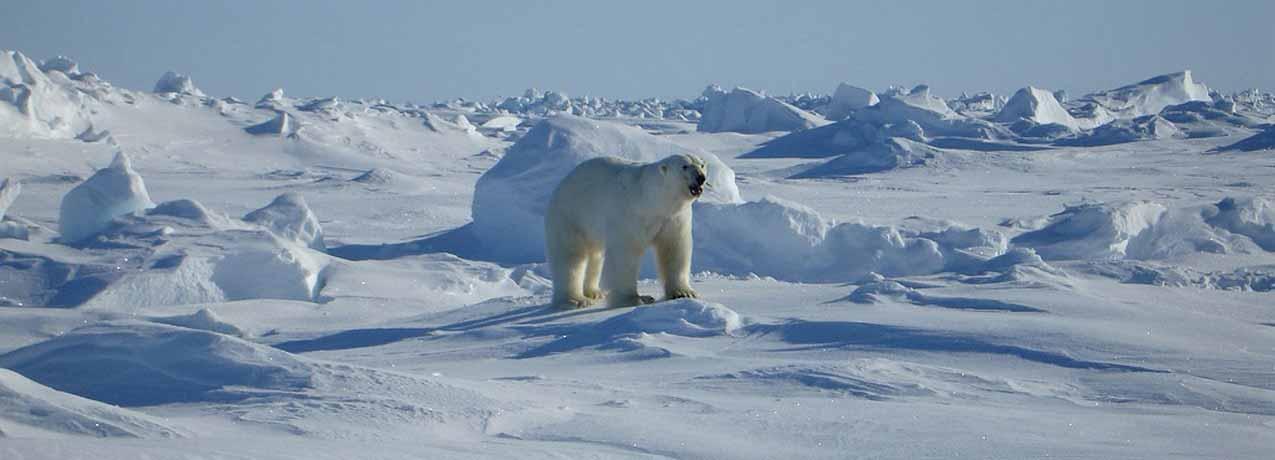 Arktis / Nördliches Polarmeer