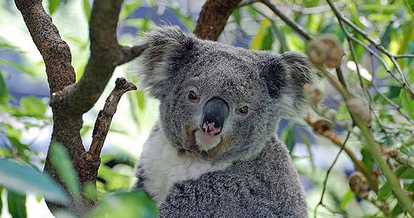 Australien - Bild 2