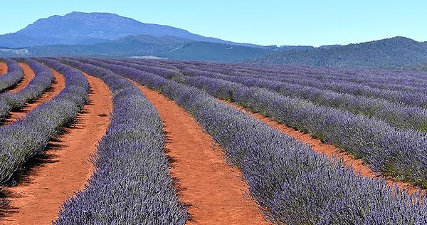 Tasmanien - Bild 2